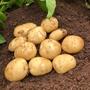 Potato Acoustic