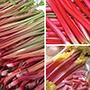 Rhubarb Collection