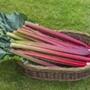 Rhubarb Poulton's Red