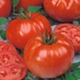 Tomato Buffalo Steak F1 Grafted Plants