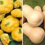 Squash Plant Collection