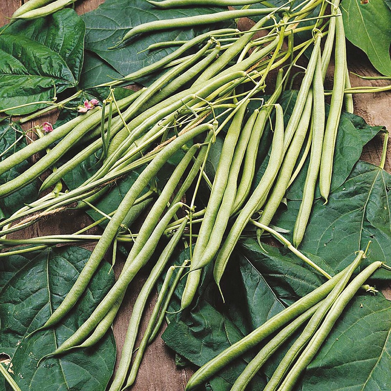 French Bean (Climbing) Isabel Seeds - Peas And Beans From DT Brown