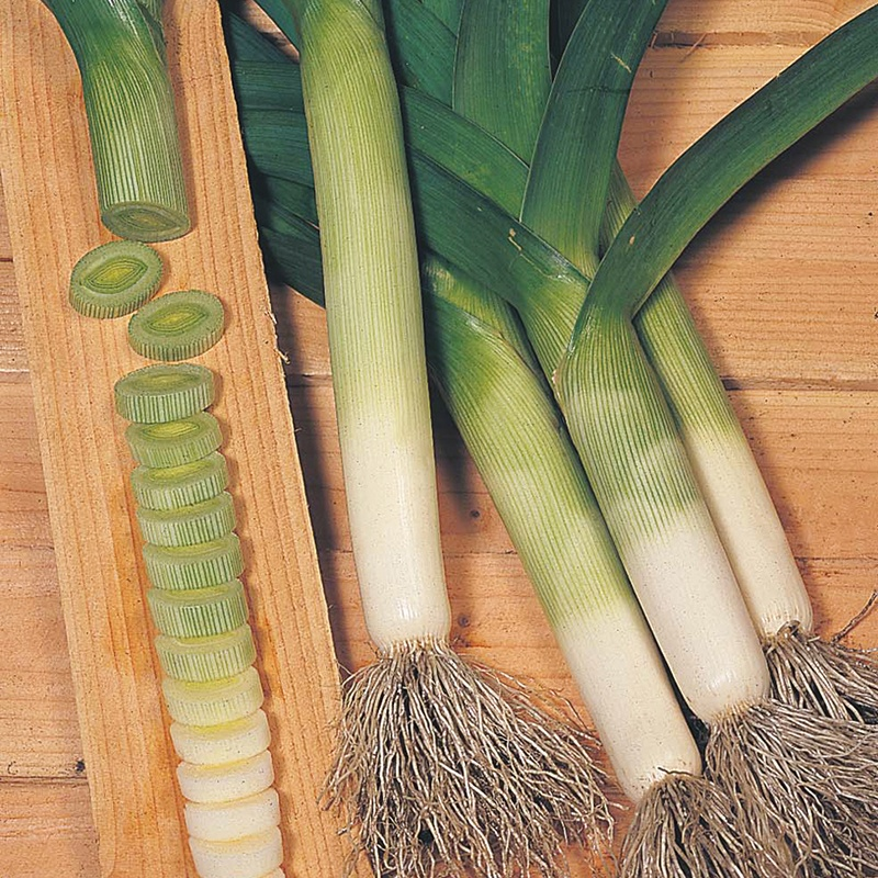 how to keep leek seeds