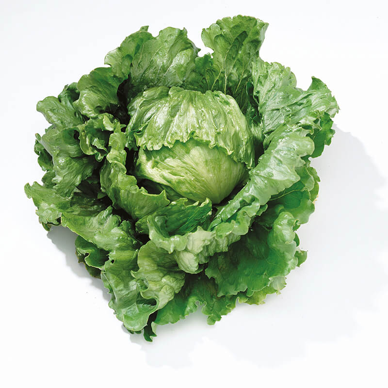 Lettuce Barcelona Seeds|D. T. Brown Vegetable Seeds