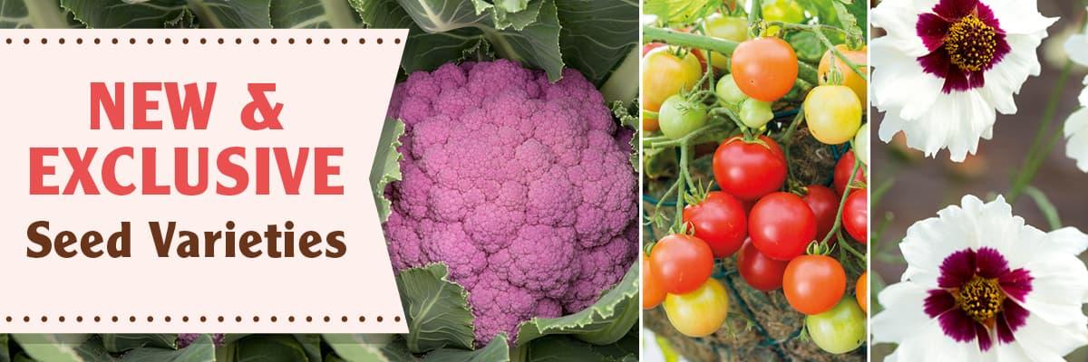 New Vegetable Seed Varieties