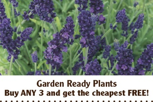 D.T.Brown Allotment and Garden Club Offers