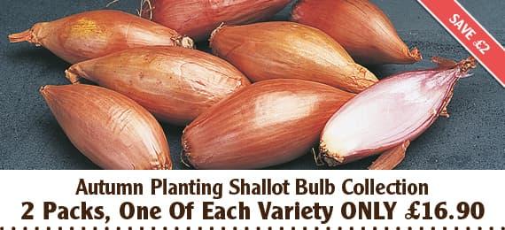 Autumn Planting Shallot Bulb Collection