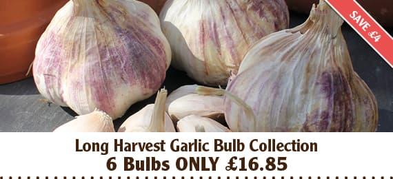 Long Harvest Garlic Bulb Collection