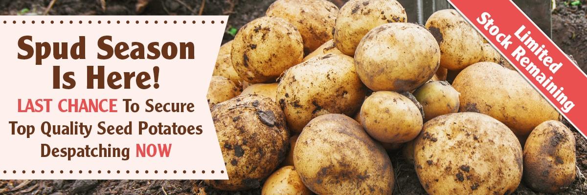 Quality Seed Potatoes