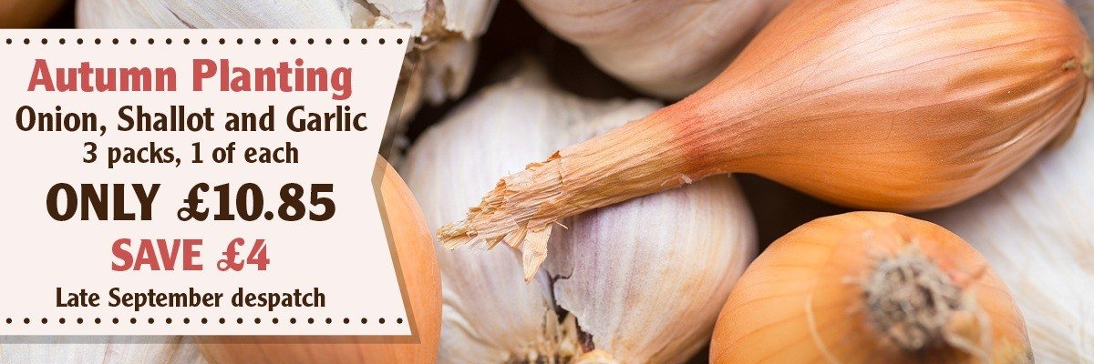 Autumn Onion Shallot Garlic Collection