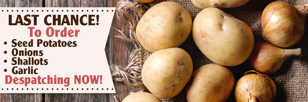 Last Chance Seed Potatoes