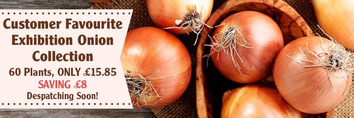 Onion Exhibition Plants