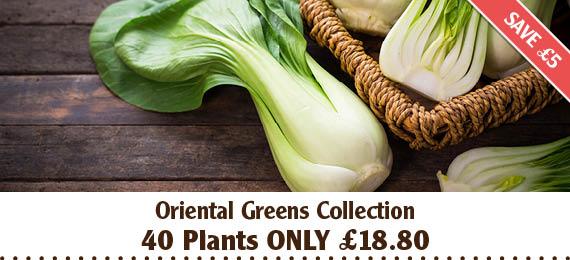 Oriental Green Vegetable Plants