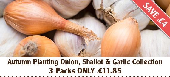 Autumn Planting Onion, Shallot and garlic