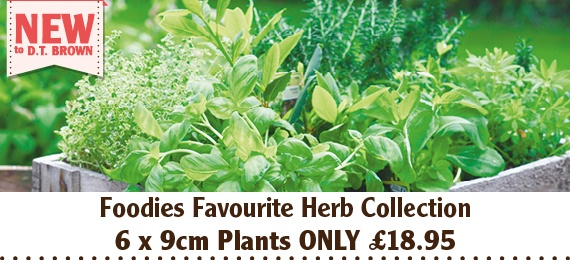 Foodies Favourite Herb Collection