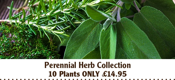 Herb Plant Collection