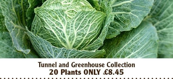 Tunnel and greenhouse vegetable plant collection