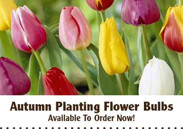 Autumn Flower Bulbs