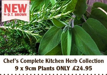 9cm Herb Collection