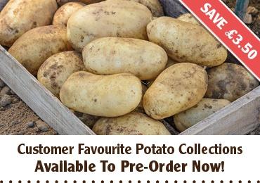 Potato Collections