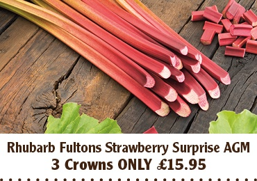 Rhubarb Fultons Strawberry Surprise