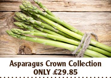 Asparagus Crown Collection