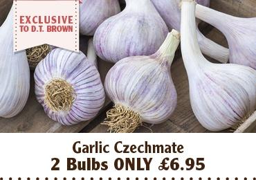 Garlic Czechmate