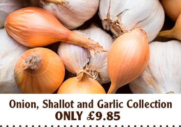 Onion Shallots And Garlic