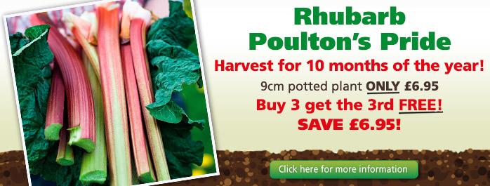 Rhubarb Poulton's Pride
