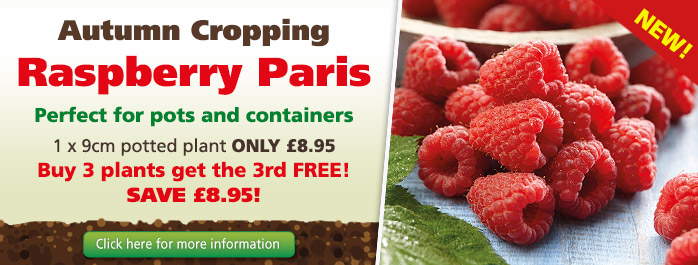 Autumn Cropping Raspberry Paris
