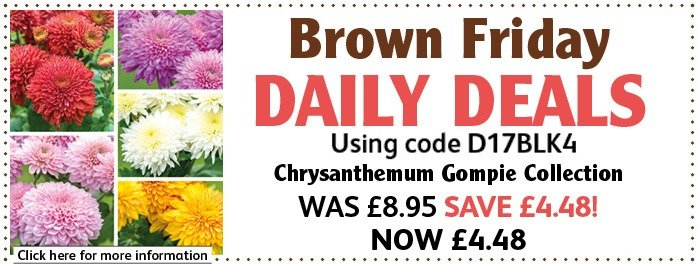 Chrysanthemum Collection 50% off