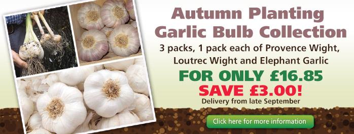 Autumn Planting Garlic Collection