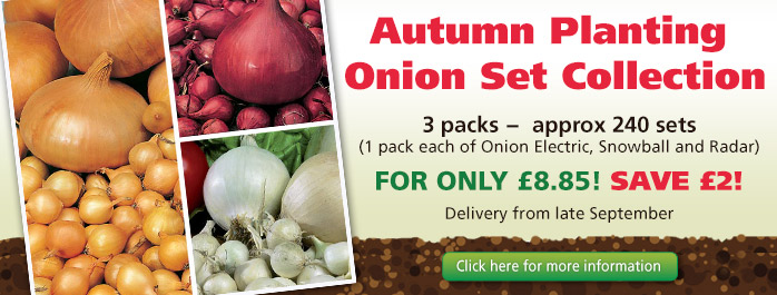 Autumn Onion Collection