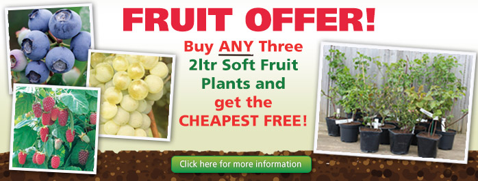 Buy 3 fruit plants, get the cheapest free