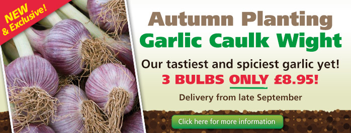 Garlic Caulk Wight