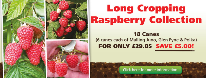 Long Cropping Raspberry Collection