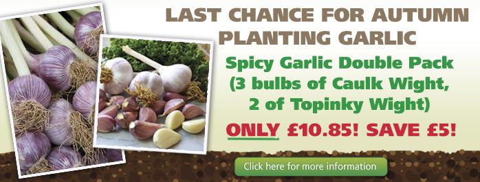 Last Chance Autumn Planting Garlic