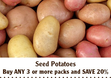 SAVE 20 Potato Offer