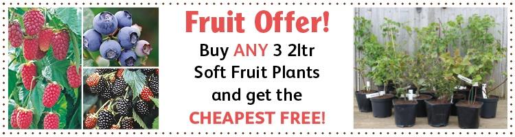 DT Brown Fruit Offer